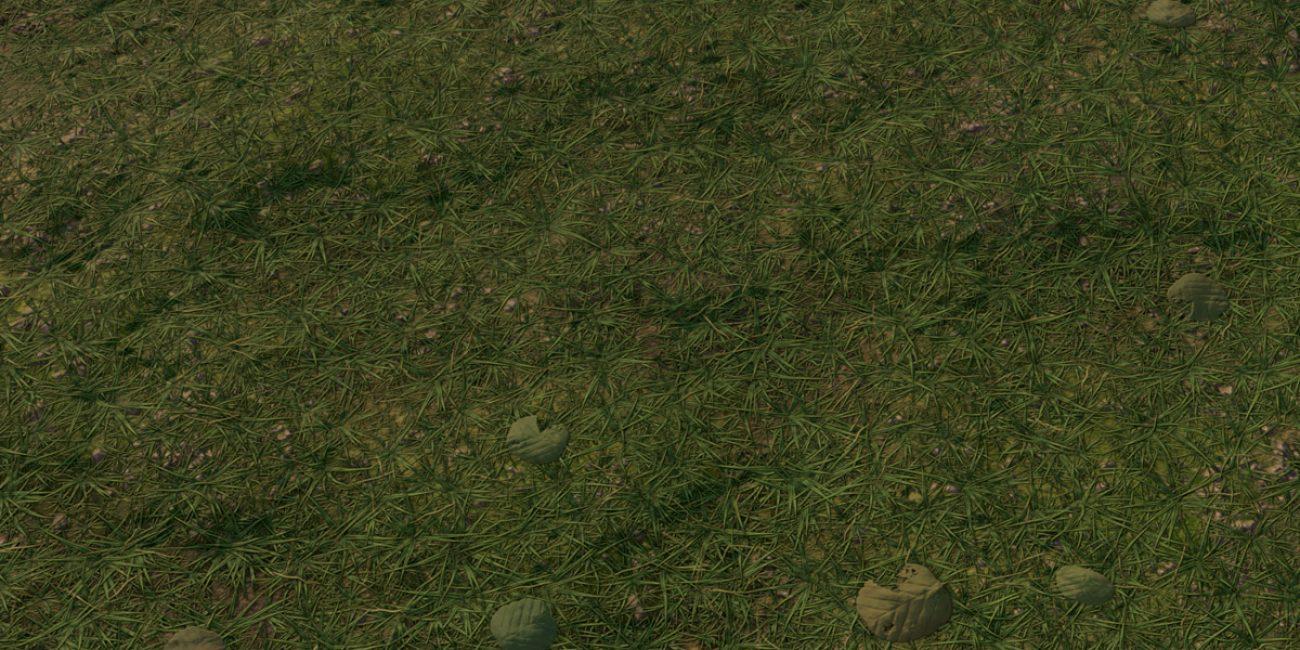 Grass_BeautyShot_Evening